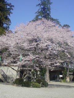 奥武蔵の春