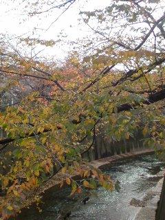 石神井川の紅葉