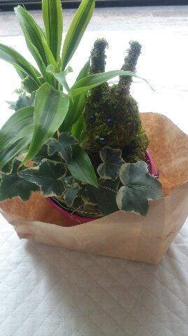 カステラ、植物